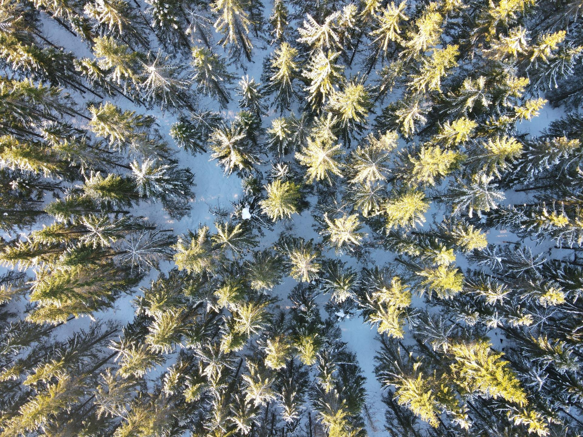 MARCSMAN: Simulating the risk of forest damage caused by climate change